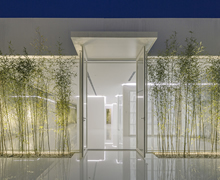 Bamboo Forest on the Roof